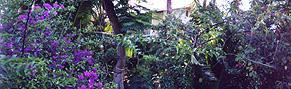 garden.2.jpg